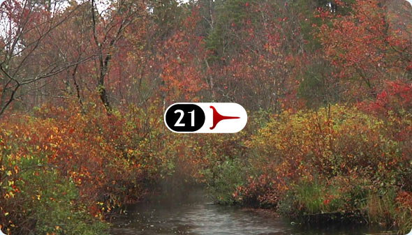 Long Shits By Evan Wilder 21 - Cedar Stream In October Rain