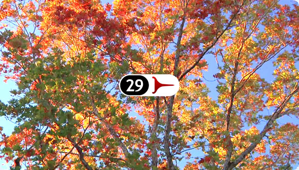 Long Shits By Evan Wilder 29 - Autumn Wind Through Oaks