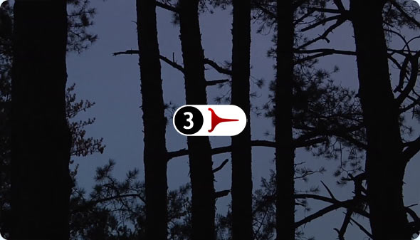Long Shits 3 - Windy Pines At Dusk